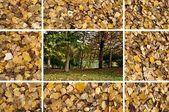 Collage-herbst — Stockfoto