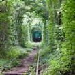 Green tunnel - Stock Photo