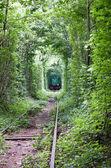 Tunnel vert — Photo