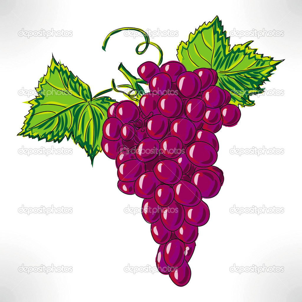 Raster Drawing Violet Grape With Green Sheet Photo By Grapes Drawing In  Color