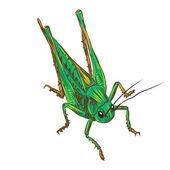 Desert locust — Vector de stock