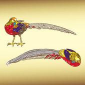 Golden pheasant — Stock Vector