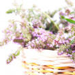 Foto de Stock  : Thyme in basket on white background