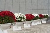Flowerpot bowl of flowers — Stock Photo
