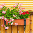 Flowers in a flowerpot. — Stock Photo