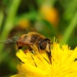 Bee on yellow flower. — Stock Photo #35495753