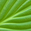 Green leaf background. — Stock Photo