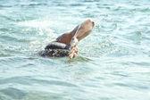 Плавание — Стоковое фото
