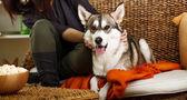 Dog on sofa — Stock Photo
