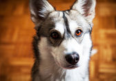 Retrato de cachorro — Foto Stock