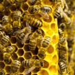 Foto Stock: Macro of working bee on honeycells