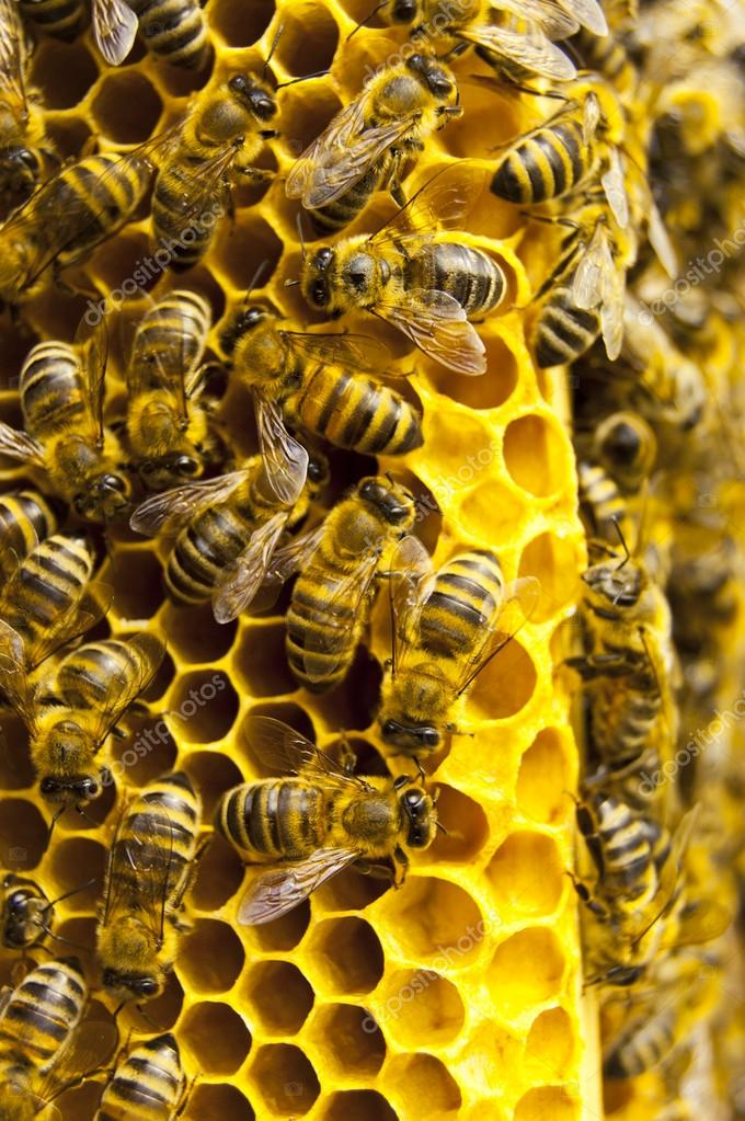 Close up view of the working bees on honeycells — Stock Photo #14581941