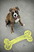 Happy Dog Boxer — Stock Photo