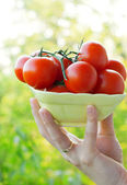 Farmer showing organic tomatoes. Healthy food concept — Stock Photo