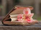 Old Book with pink flowers — Stock Photo