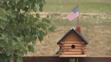 Bird and bird house — Stock Video