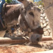 Donkey's in Mijas — Video
