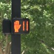 Pedestrian light — Stock Video