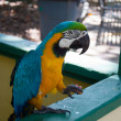 Macaw — Stock Photo #36839937