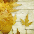 Autumn leaves background — Stock Photo #12795606