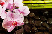 Spa scene with pink orchid — Stock Photo