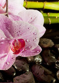 Spa scene with pink orchid, detail — Stock Photo