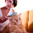 Girl grooming her cat — Stock Photo