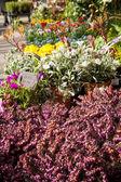 Flores no mercado — Fotografia Stock