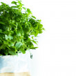 Fresh thyme plant — Stock Photo