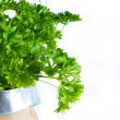 Curly parsley — Foto de Stock