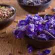 Dried larkspur petals — Stock Photo