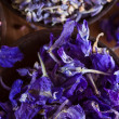Dried lavender — Stock Photo