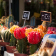 Succulents at market — Foto Stock