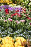Blumen am markt — Stockfoto