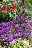 Цветы на рынке — Стоковое фото