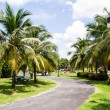 Walk path in Coconut garden at becket, Thailand — Stock Photo