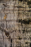 Coco palm detail bark — Stock Photo