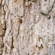 Old Wood Tree Texture Background Pattern — Stock Photo