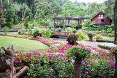 Mae Fah Luang ogród — Zdjęcie stockowe