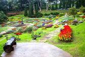 Mae fah luang ogród, zlokalizować na doi tung, prowincji chiangrai, Tajlandia — Zdjęcie stockowe