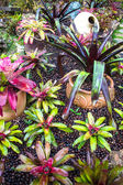 Bromeliad at Mae Fah Luang Garden,locate on Doi Tung,Thailand — Stock Photo