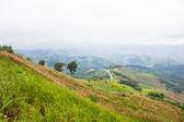 Rice farm on mountain, Northern, Thailand. — Stock Photo