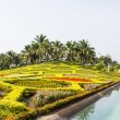 Tropical garden, Thailand — Foto Stock