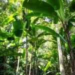 Tropical Rainforest Landscape, Thailand — Stock Photo