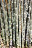 Bambusové pozadí — Stock fotografie