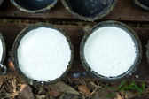 Bowl to collect milk from rubber tree — Stock Photo