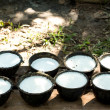 Bowl to collect milk from rubber tree — Stock Photo #38370113