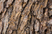 Back tree texture — Stock Photo