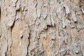Wood Tree Texture Background Pattern — Stock Photo