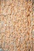 Bark of tree texture — Stock Photo